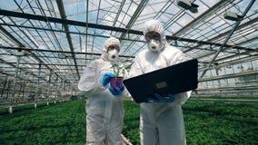 安全穿戴的玻璃温室工作者分析植物 股票录像