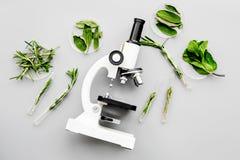 安全食物 食品分析的实验室 在显微镜附近的绿色在灰色背景顶视图 库存图片