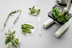 安全食物 食品分析的实验室 草本,绿色在灰色背景顶视图拷贝空间的显微镜下 免版税库存照片