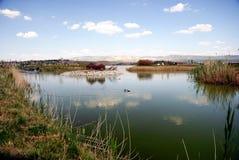 安卡拉我mogan公园池塘火鸡 图库摄影