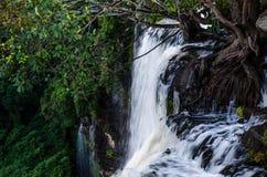 安哥拉的Kalandula瀑布细节黑暗的照片满流的与豪华的绿色雨林和树根源,非洲 库存图片