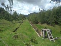 安地斯山的森林 免版税库存图片