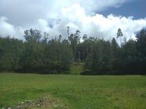 安地斯山的森林 图库摄影