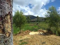安地斯山的风景 库存照片