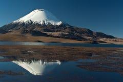 安地斯山的parinacota火山 库存图片