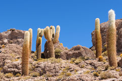 安地斯beautifull玻利维亚du撒拉尔uyuni 免版税库存照片