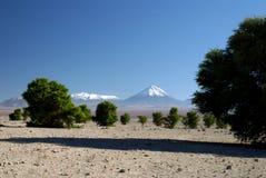 安地斯licancabur火山 免版税库存图片