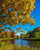 安大略壮观的秋叶,加拿大 免版税库存图片