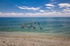 从安大略湖海岸线的惊人的看法有许多的低头,漂浮在水中的鸟 库存图片