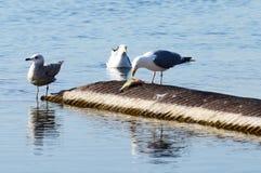 安大略湖风景 免版税图库摄影