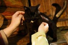 安慰一只病的猫 免版税图库摄影