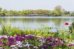 安排美术馆和平定水池的花 库存图片