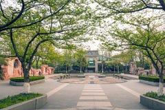 安排美术馆和平定水池的花 图库摄影