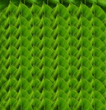 安排绿色叶子背景 图库摄影