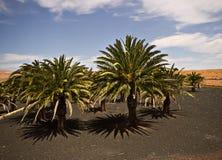 安提瓜岛的风景 免版税库存图片
