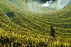 安沛市,越南- 2017年9月18日:在收获季节的露台的米领域与领域的少数族裔妇女在Mu Cang柴, vi 免版税图库摄影
