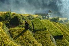 安沛市,越南- 2017年9月18日:在收获季节的露台的米领域与领域的少数族裔妇女在Mu Cang柴, vi 免版税库存照片