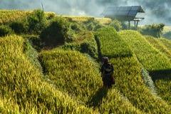 安沛市,越南- 2017年9月18日:在收获季节的露台的米领域与领域的少数族裔妇女在Mu Cang柴, vi 图库摄影