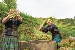 安沛市,越南- 2016年9月17日:越南在露台的领域的少数族裔妇女打谷的稻在收割期在Mu Cang 免版税库存照片