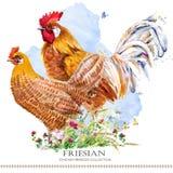 安科纳鸡品种 家禽养殖 birdFriesian国内的农场 向量例证