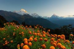 安纳布尔纳峰看法和Machapuchare锐化在从Tadapani,尼泊尔的日出 免版税库存照片