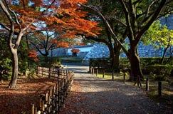 安置日本茶 库存照片