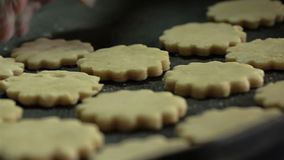 安置曲奇饼面团的妇女手在烘烤盘子 股票视频