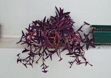安置有紫色叶子的植物在架子的花床 库存图片
