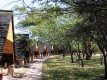 安置木的路径 库存照片
