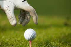 安置高尔夫球的人的手在发球区域,特写镜头 免版税库存图片