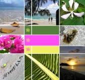 安装热带的塞舌尔群岛 图库摄影