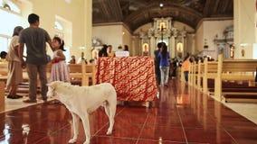 安达,菲律宾- 2018年1月5日:天主教的教区居民在星期天崇拜以后 偶然狗 股票录像