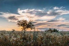 安静的夏天晚上、日落在领域,和平和quiet_ 免版税库存照片