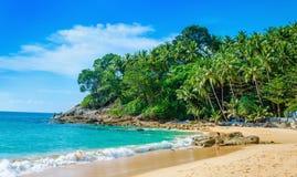 安静的天堂海滩棕榈树,泰国 库存图片