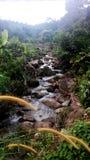 安静的小河在Balik Pulau,槟榔岛 库存图片