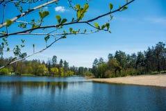 安静的森林湖 库存图片