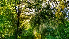 安静的森林 库存照片