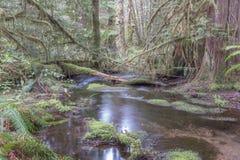 安静的森林 图库摄影