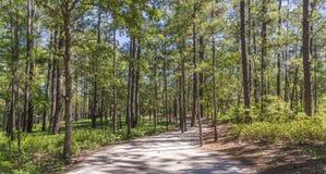 安静的步行在森林 库存照片