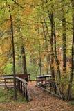 安静的步行通过森林 图库摄影