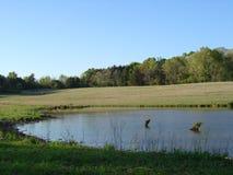 安静的池塘在农村密西西比母牛牧场地 免版税库存照片