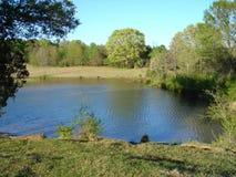 安静的池塘在农村密西西比 图库摄影