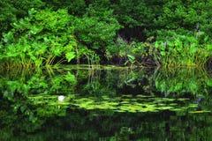 安静的池塘场面在缅因 库存图片