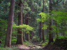 安静的路在饭山市山森林里  库存图片