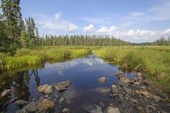 安静的路线通过沼泽地 库存照片