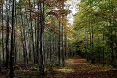安静的道路穿过黑鸟状态森林 库存图片