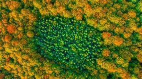 完全地被包围的具球果常青森林鸟瞰图  库存照片