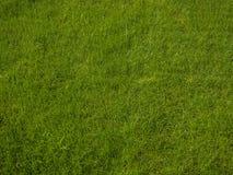 完善新鲜的豪华的短的绿草-背景 免版税图库摄影
