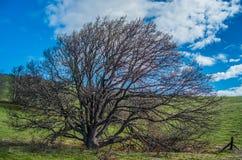 完善的上升的树 库存照片
