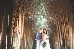 完善的夫妇新娘,摆在和亲吻在他们的婚礼之日的新郎 库存图片